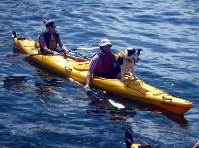 Dog_paddling.jpg