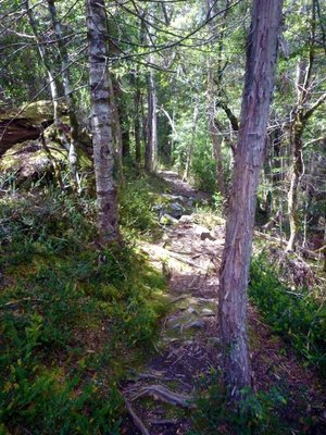 Dove_Gorge_woodland_path.jpg