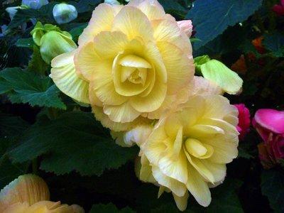 Flower_white.jpg