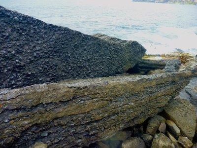 Fossil_Cliffs2.jpg
