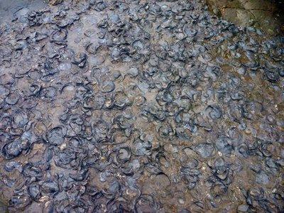 Fossil_Cliffs4.jpg