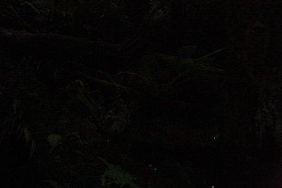 Glow_worms__Medium_.jpg