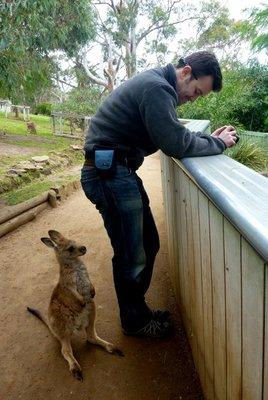 Kangaroo1__Medium_.jpg