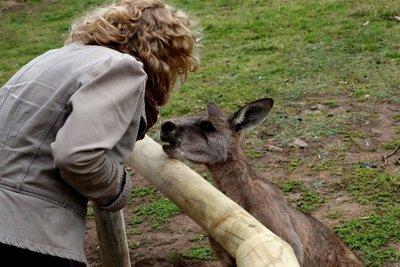 Kangaroo8__Medium_.jpg