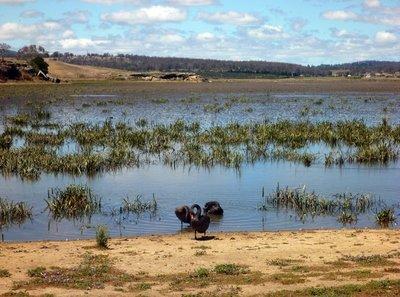 Lake_Dulverton.jpg