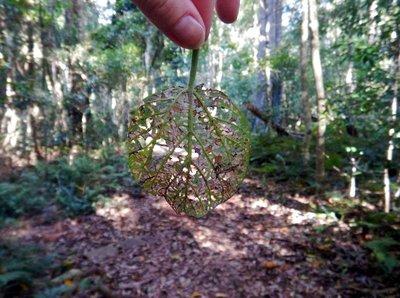 Leaf_in_the_woods.jpg