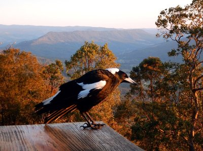 Magpie view