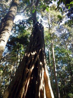 Mark_up_a_tree1.jpg