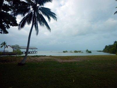 Port_Douglas_mangroves.jpg