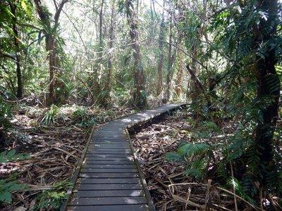Rainforest_Boardwalk.jpg