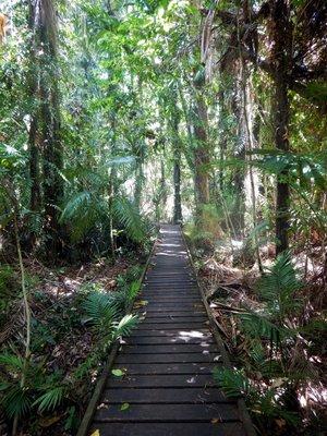 Rainforest_Boardwalk1.jpg