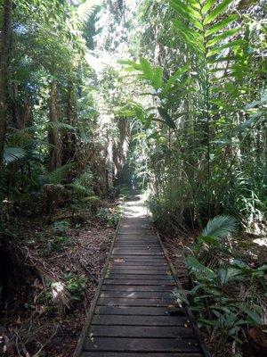 Rainforest_Boardwalk2.jpg