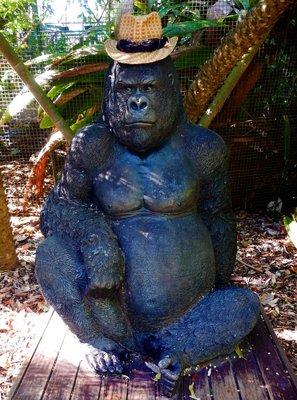 Rockhampto..gorilla_hat.jpg