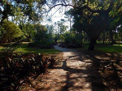 Rockhampto..rdens_trees.jpg