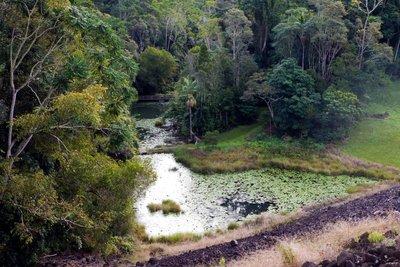 Rocky Creek Dam Walk