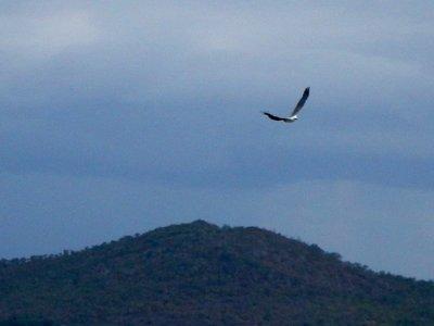 Sea Eagle hill