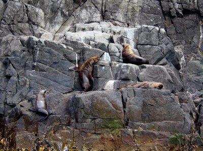 Sea_Lion_climbing.jpg