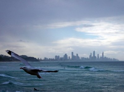 Seagulls Surfers Paradise2