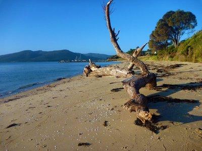 Tree_on_beach.jpg