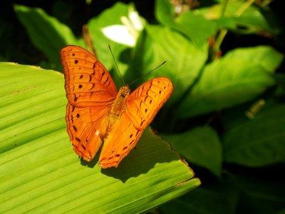 butterfly2b.jpg