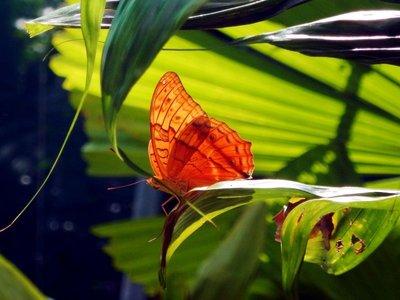 butterfly2d.jpg