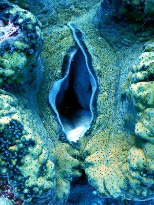 clam_inside.jpg