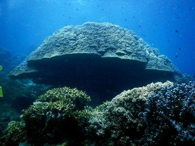 coral_boomie.jpg