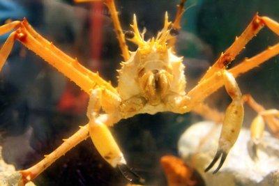 crab_face.jpg