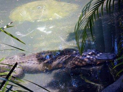 croc_Fang1.jpg