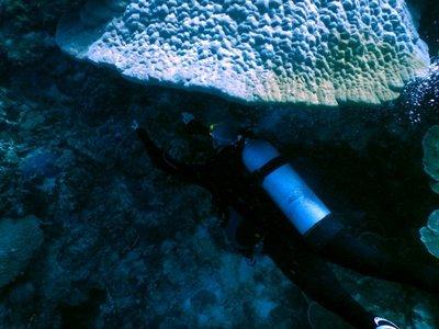 diver_under_bommie.jpg