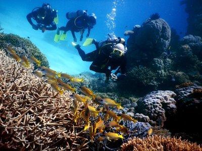 divers___fish.jpg