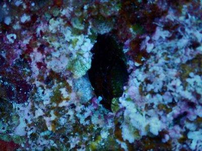 electrofluorescent_clam.jpg
