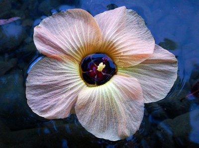 flower_in_water.jpg