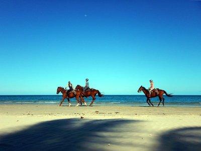 horses_run..Myall_Beach.jpg