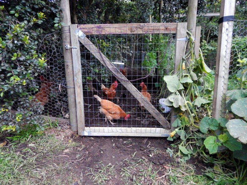 Chicken Gate