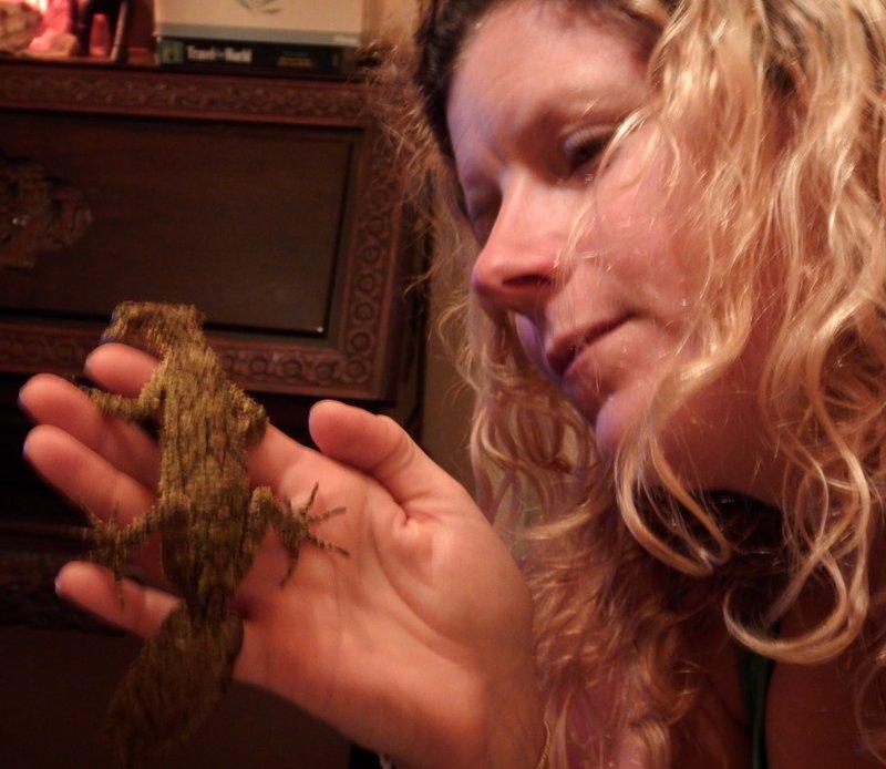 Leaf-tailed gecko Charlotte1