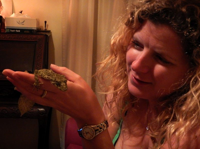 Leaf-tailed gecko Charlotte3