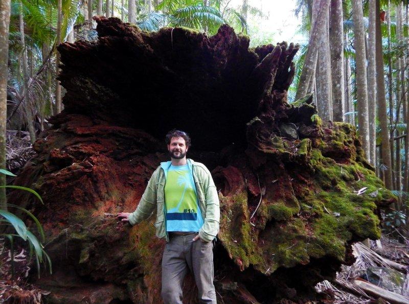 Mark big tree