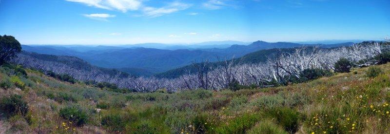 Mt Stirling Burnt Trees