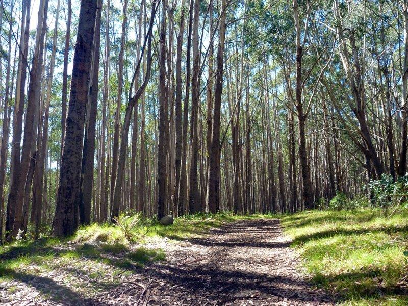 Mt Stirling trail
