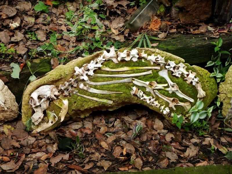 Stone skeleton