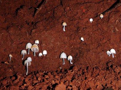 mushroom moonscape