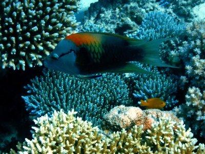 rainbow_fish.jpg