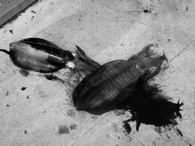 squid ink b&w
