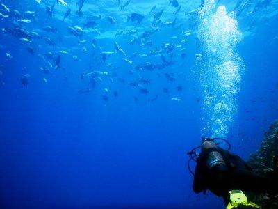 tuna___diver.jpg