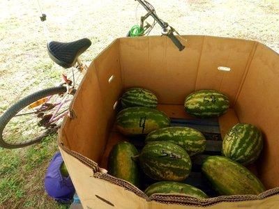 water_melon.jpg