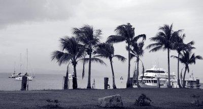 windy_Port_Douglas_b_w.jpg