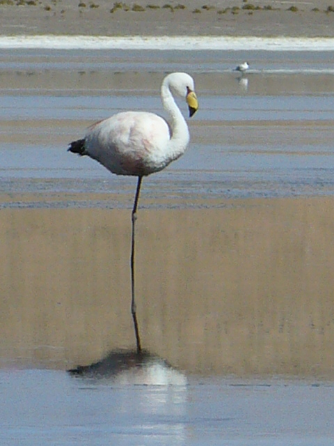 one legged flamingo