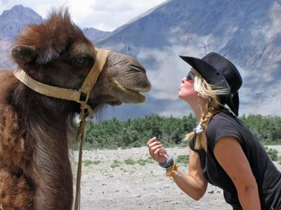 Camel Kiss in the northest of India