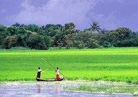 nshabuj_bangladesh.jpg